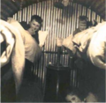 Anderson shelter in Bournemouth during WW2.png